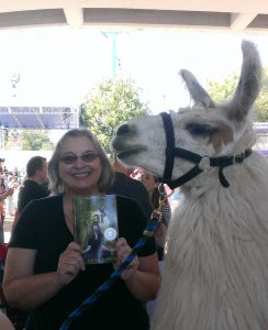 llamas at the fair