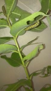 Happy caterpillars.
